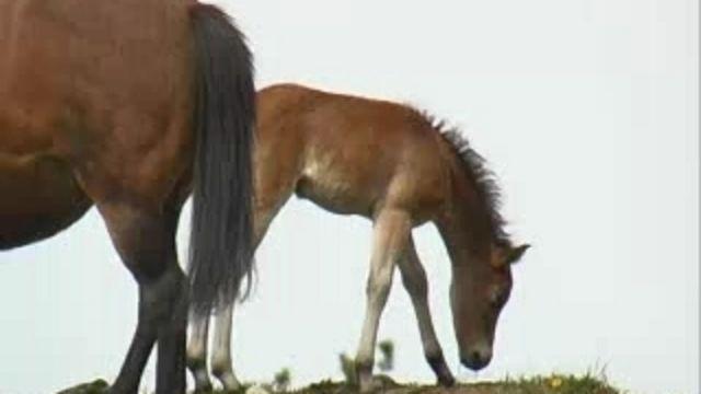 Runt i naturen - Hönsrumpa och kofötter : Hästar