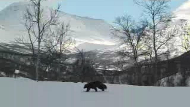 Runt i naturen - Meänkieli : De fyra stora - järv, lo, varg och björn