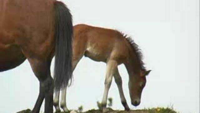 Hönsrumpa och kofötter - meänkieli : Hästar