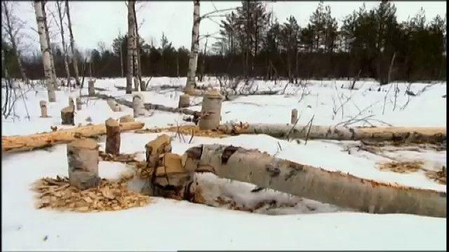 Djurkoll - finska : Bäver