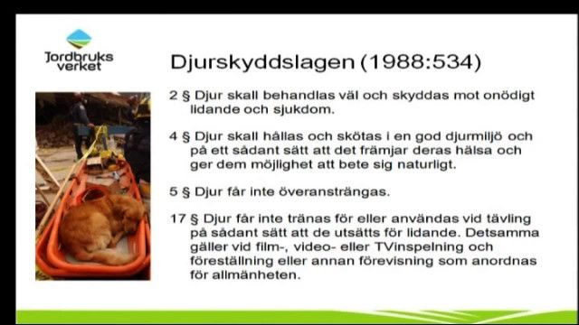 UR Samtiden - Hunden i tv : Regler och lagar kring hundar i tv