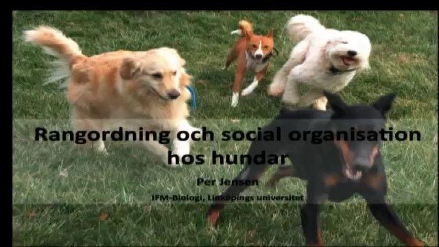 UR Samtiden - Hunden i tv : Hundar är inga vargar