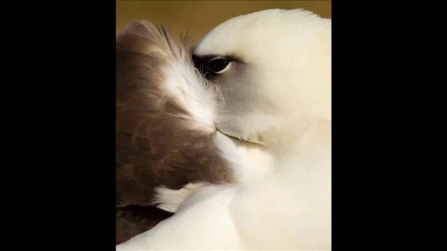 UR Samtiden - Bok och bibliotek 2011 : Albatrossernas ö