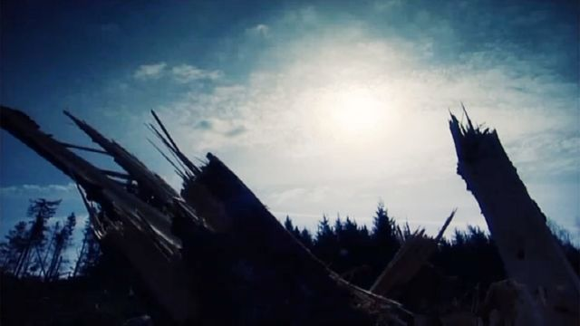 Fatta fakta : Stormdrabbad skog
