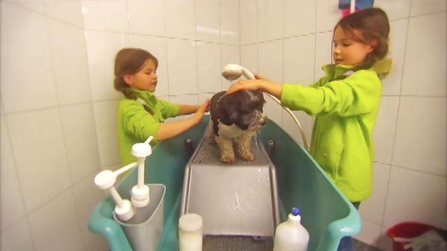 Drömyrket : Hundskötare