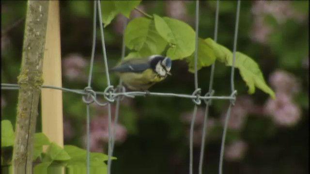 Skrutts fågelbok : Små fåglar