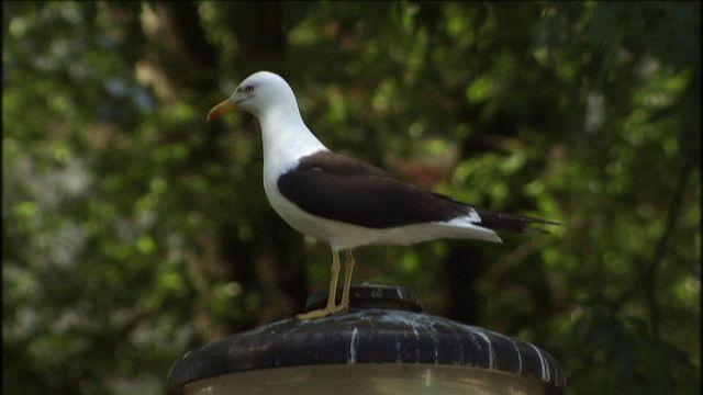 Skrutts fågelbok : Stora fåglar