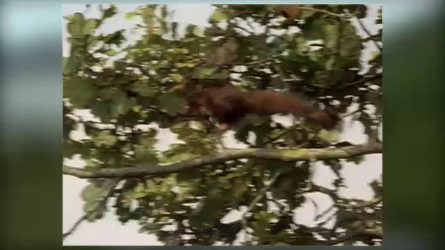 Vilda djur : Ekorre