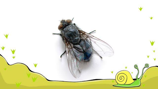 En flugas liv : Oväder