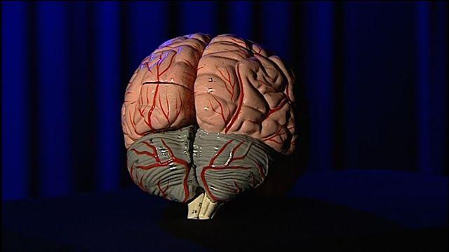 UR Samtiden Tema : Träna en hjärna