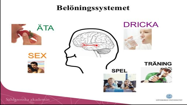 UR Samtiden - Hjärndagen 2014 : Alkohol och belöningssystemet