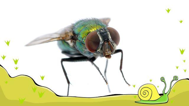 En flugas liv - meänkieli : Ett farligt hus