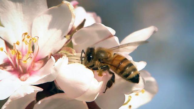 Honungsfabriken : Pollen är gott