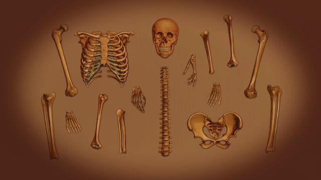 Din kropp - meänkieli : Skelettet och musklerna