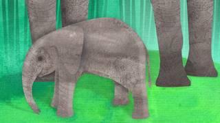 Djurlåtar: Om jag var elefant