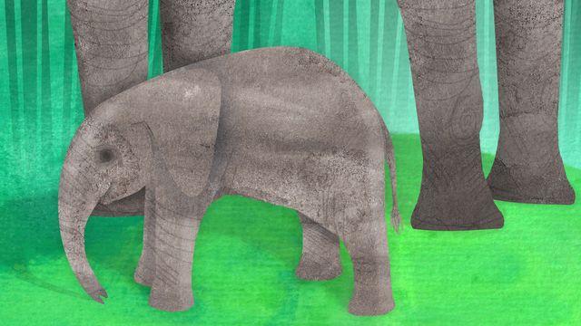 Djurlåtar : Om jag var elefant