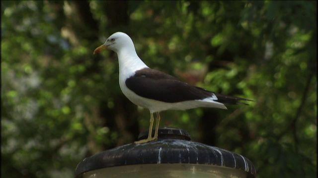 Skrutts fågelbok - jiddisch : Stora fåglar
