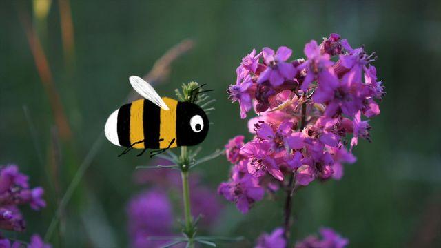 Skrutts flora - jiddisch : Röda blommor