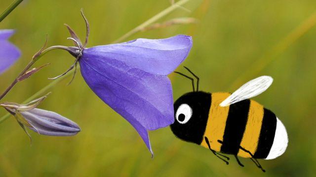 Skrutts flora - jiddisch : Blå blommor