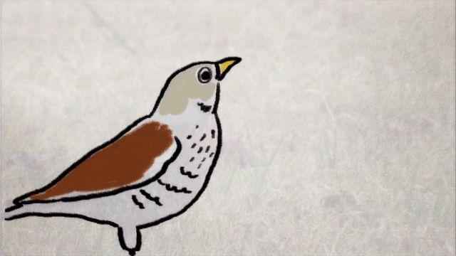 Skrutts fågelbok - jiddisch : Större fåglar