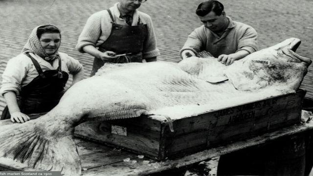 UR Samtiden - Så tänder vi gnistan : EU:s historiska fiskeavtal