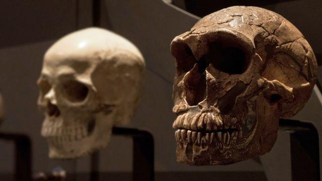 Jack och jordens utveckling : Neandertalaren