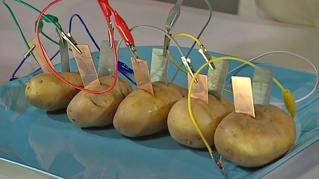Labba - finska : Potatisbatteriet