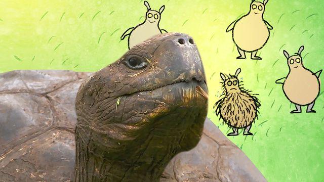 Om evolution : Variation och sköldpaddor