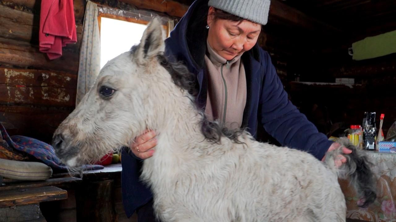 Sibirien dejtingsajt Dating en kille med alltför många kvinnliga vänner