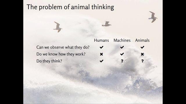 UR Samtiden - Tänka på att tänka : Intelligent beteende hos djur