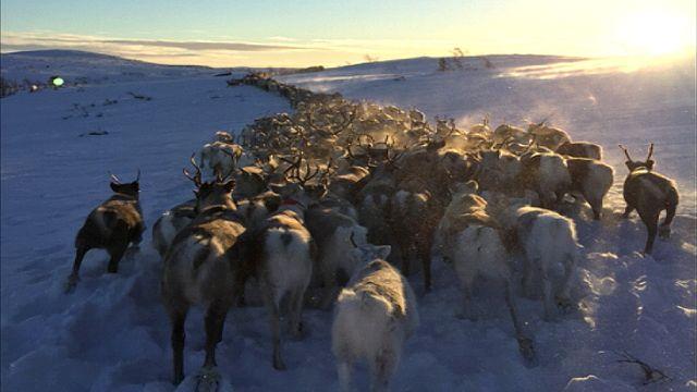 UR Samtiden - Samisk hälsa på agendan : Renskötande samer går inte till doktorn