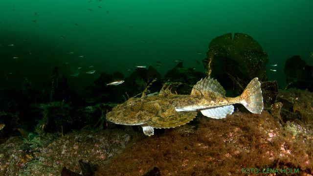 UR Samtiden - Naturfotodagen : Om undervattensfoto nära och fjärran