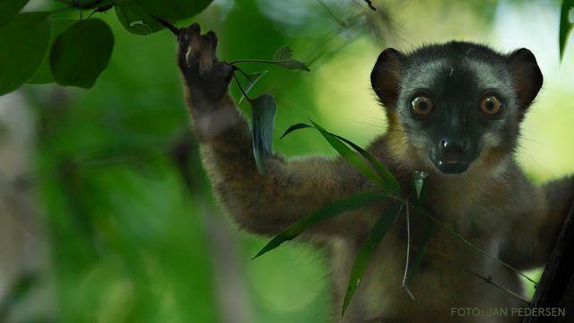 UR Samtiden - Naturfotodagen : Magiska Madagaskar
