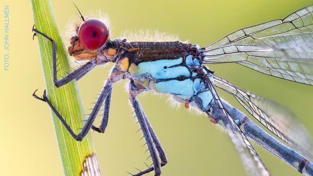 UR Samtiden - Naturfotodagen : Småkryp och makrofoto