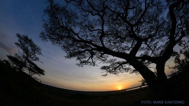 UR Samtiden - Naturfotodagen : Förtrollande skog