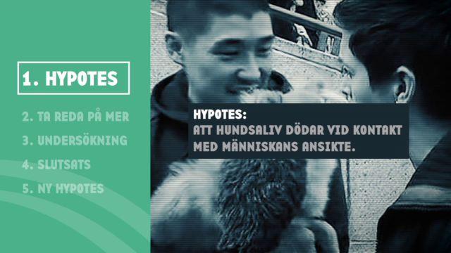 Kolla myten - vetenskapligt : Hundsaliv