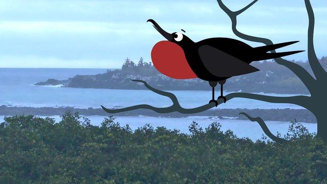 Om evolution - lulesamiska : Galapagos och snygga hanar