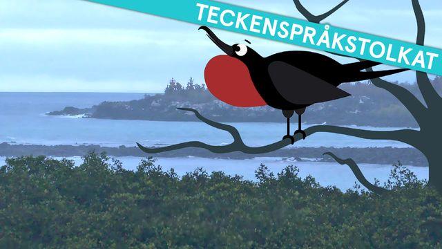 Om evolution - teckenspråkstolkat : Galapagos och snygga hanar