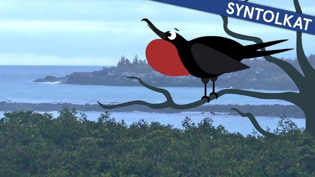 Om evolution - syntolkat : Galapagos och snygga hanar