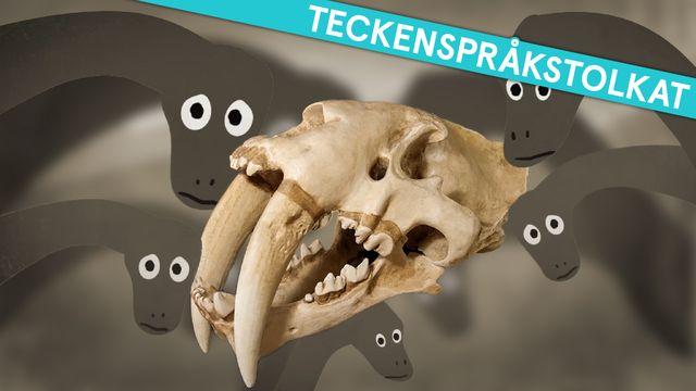 Om evolution - teckenspråkstolkat : Dinosaurier, tid och fossil