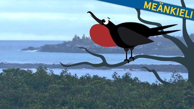Om evolution - meänkieli : Galapagos och snygga hanar