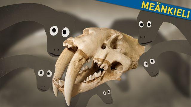Om evolution - meänkieli : Dinosaurier, tid och fossil