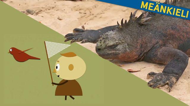 Om evolution - meänkieli : Charles och arternas uppkomst