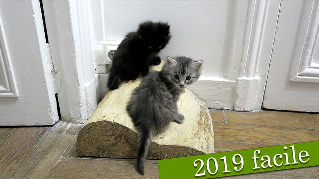 Nouvelles en français facile : 2019-03-02