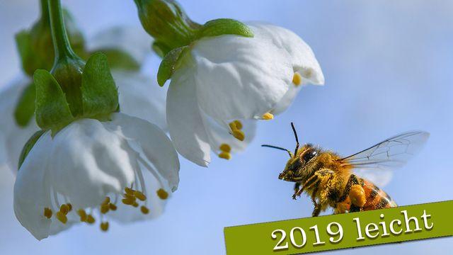 Nachrichten auf Deutsch Leicht : 2019-03-02