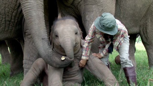 Elefant dejtingsajt