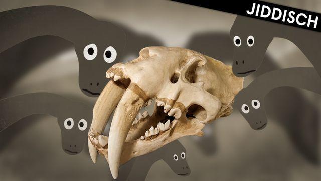 Om evolution - jiddisch : Dinosaurier, tid och fossil