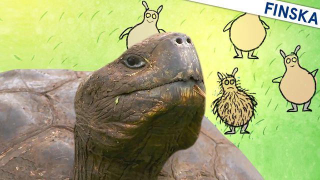 Om evolution - finska : Variation och sköldpaddor