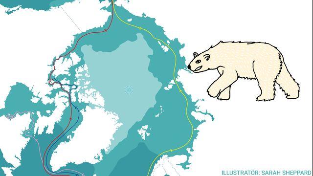 Kul fakta - resor jorden runt : Arktis - en genväg?