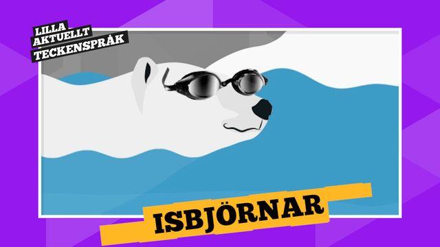 Vi förklarar! : Isbjörnar